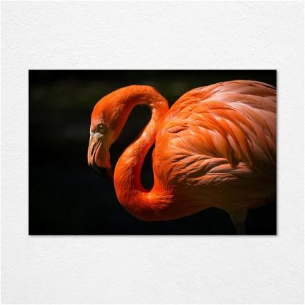 Flamingo Face