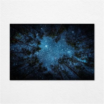 Star Tree's