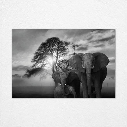 Elephant Family