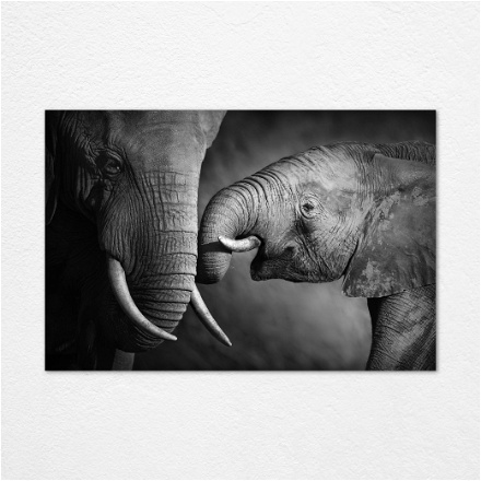 Elephant Mother Son