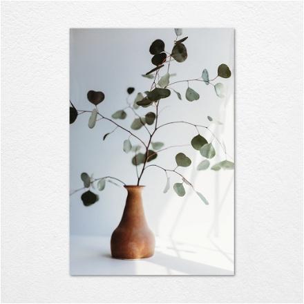 Aesthetic Plant