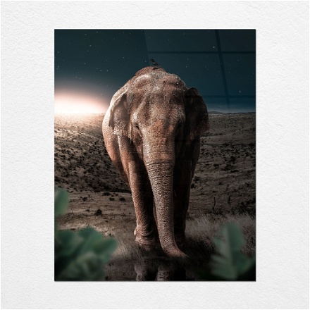 Elephant Midnight