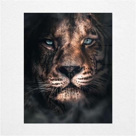 Lion Mergerd